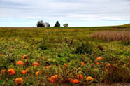 <p>Pack your bags as we explain why autumn is the best time of the year to take a trip.</p>